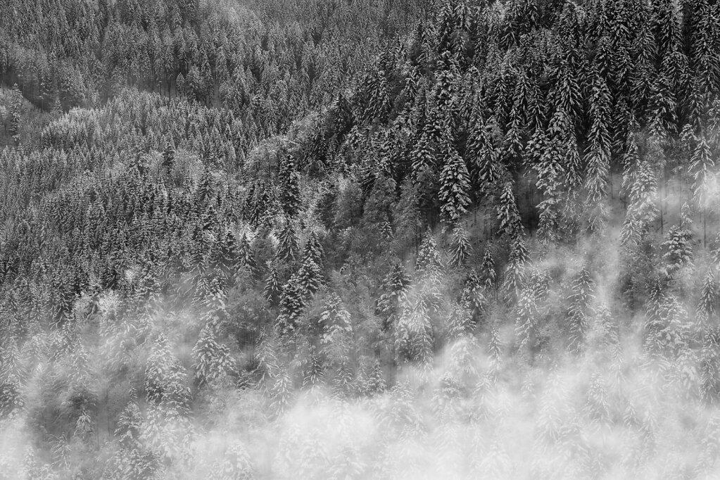 Schwarzwald 6