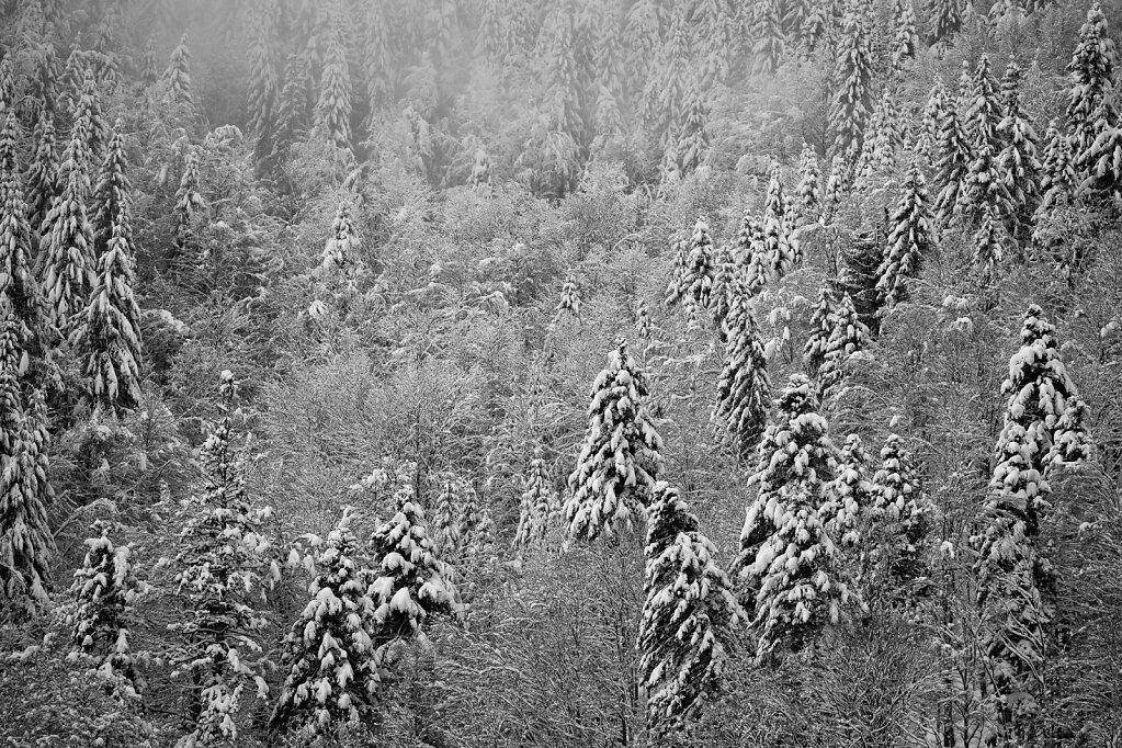 Schwarzwald 14
