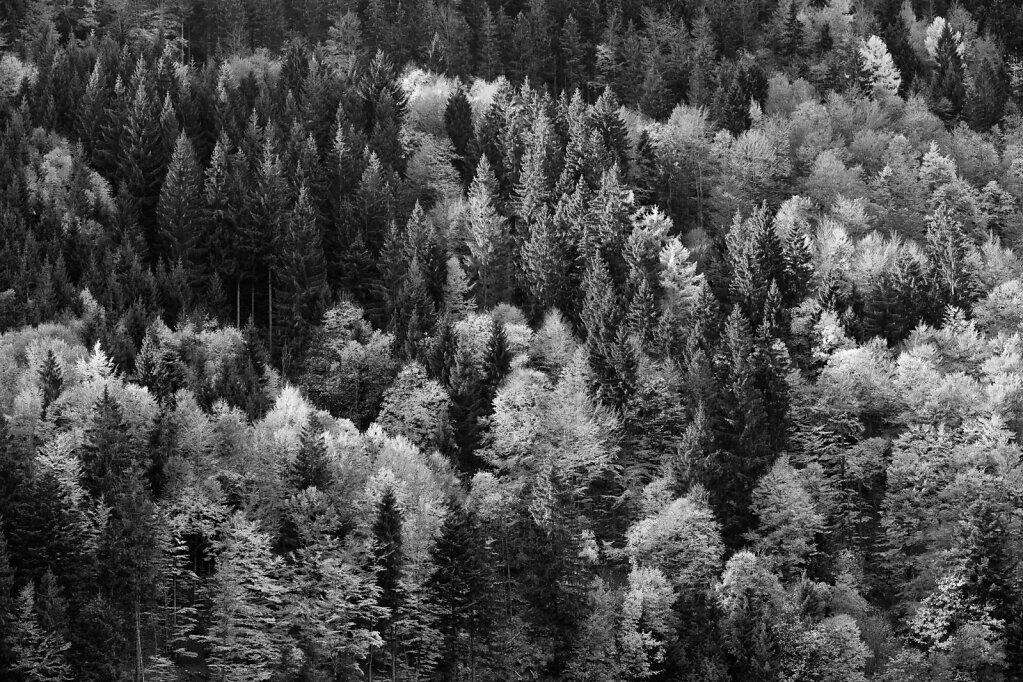 Schwarzwald 36