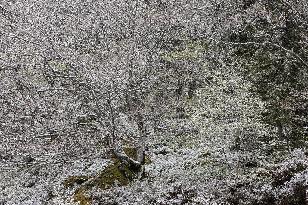 Schwarzwald XXIV