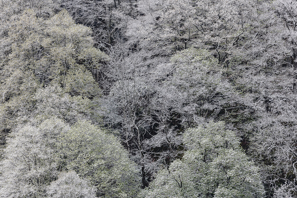 Wald XLIX