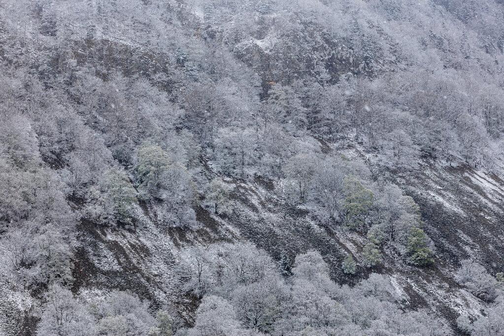 Schwarzwald XXIX
