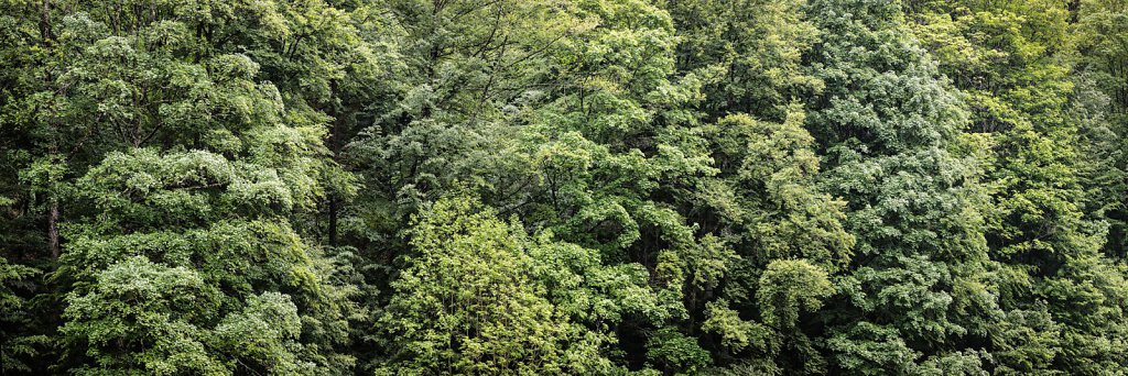 Wald 41