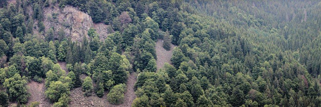 Wald 42