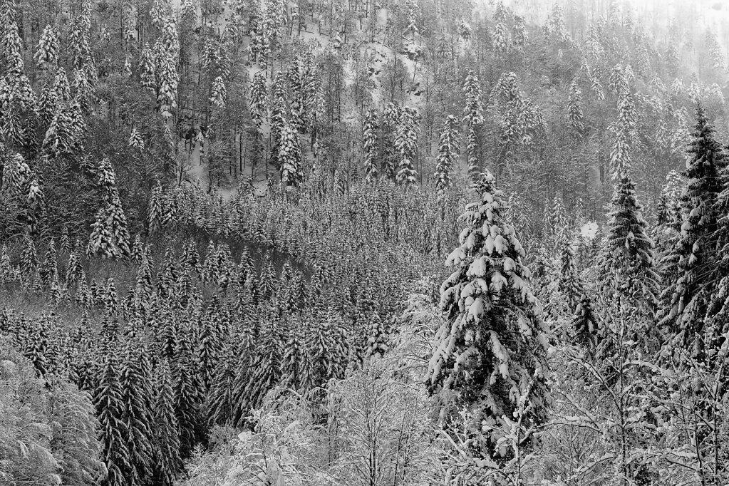 Schwarzwald 54