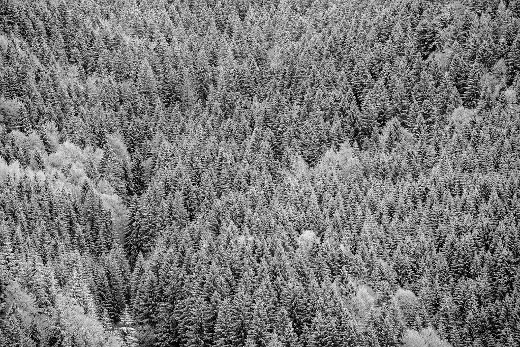 Schwarzwald 65